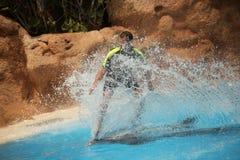 Surfar com golfinho Imagens de Stock