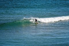 Surfar do ber??rio da baleia da praia de Logan fotografia de stock