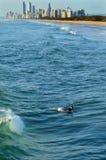 Surfare i surfareparadiset Queensland Australien Arkivbilder