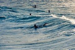 Surfaren rider en stor blå tropisk våg i paradis Arkivfoton