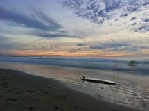 Awesome surfboard sunset Stock Images