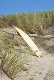 Surfboard leaning against wood. Surfboard on beach leaning against dry wood on dune Stock Photography
