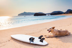 Free Surfboard On The Wild Beach Royalty Free Stock Photography - 52233587