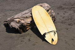 Surfboard on a treestump on volcanic sand beach Stock Image