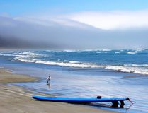 Surfboard and waves, with a seagull, long beach. Royalty Free Stock Photography