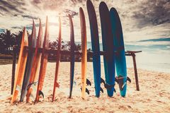 surfboards Immagini Stock