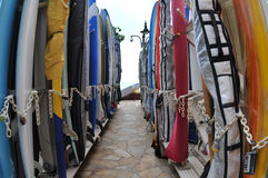 surfboards стоковая фотография
