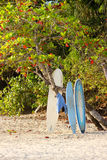 Surfboards on the Beach. In Manuel Antonio, Costa Rica Stock Image