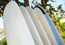 Surfboards for rent on seaside. Beach Royalty Free Stock Photos