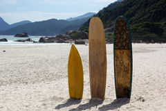 Surfboards standing upright in bright sun on the beach, Brazil Royalty Free Stock Photos
