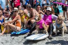 Surfende Hunde, Surfbretter, Leute auf Strand lizenzfreies stockbild
