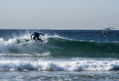 Surfer και Seagulls Στοκ φωτογραφίες με δικαίωμα ελεύθερης χρήσης