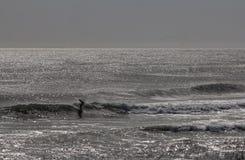 Surfer στο σούρουπο Στοκ Εικόνες