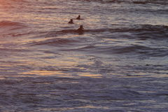 Surfer στο τέλος εδαφών του Σαν Φρανσίσκο Στοκ εικόνα με δικαίωμα ελεύθερης χρήσης