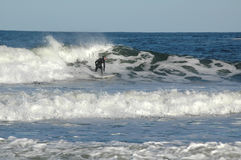 Surfer. Riding the waves on the Atlantic coast royalty free stock photography