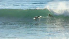 Surfer Adriano DeSouza die in de Schrijver uit de klassieke oudheid van O'neill surfen Coldwater stock videobeelden