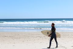 Surfer. A bearded hip surfer in wetsuit walks up the beach with this surfboard on Llandudno Beach, Cape Town, South Africa royalty free stock image