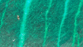 Surfer in Blue Water Stock Image