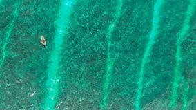 Surfer in Blue Water Stock Photo