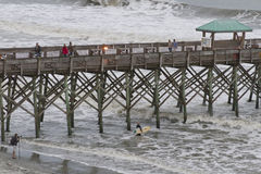 Surfer Braves Hurricane Sandy Waves Stock Images