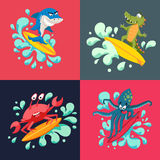 Surfer cool animals Royalty Free Stock Photography