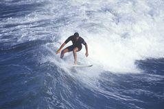 Surfer on crest of wave, Royalty Free Stock Photo