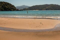 Surfer dans la baie de Waikawau Images stock