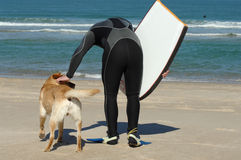 Surfer and is dog royalty free stock photo