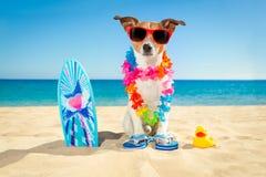 Surfer dog beach stock photo