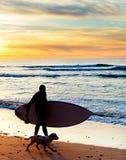 Surfer, dog, beach Royalty Free Stock Image