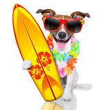 Surfer dog. Silly funny surfer dog with fancy surf board and flower chain stock photos