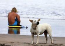 Surfer en hond Royalty-vrije Stock Fotografie
