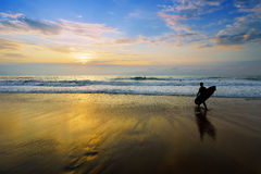 Surfer entering water at sunset Royalty Free Stock Image