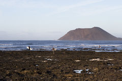 Surfer in Fuerteventura Stockbild