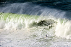 Surfer on Getxo challenge of huge waves Stock Images