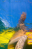 Surfer Girl.Underwater Viewing. Royalty Free Stock Photos