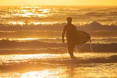 A surfer heading out into golden waves stock image