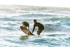 Surfer and his Dog on a Surf Board royalty free stock photography