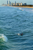 Surfer im Surfer-Paradies Queensland Australien Stockbilder