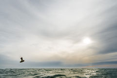 Surfer jumping at the sunset. A surfer jumps high in front of a spectacular sunset at the sea Royalty Free Stock Photos
