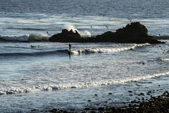 Surfer montant la petite vague Images stock