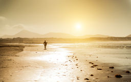Surfer on the ocean beach at sunset Royalty Free Stock Photography