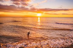 Surfer in ocean at bright sunset or sunrise. Winter surfing in ocean. Surfer in ocean at bright sunset or sunrise Royalty Free Stock Photography