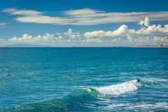 Surfer in the Pacific Ocean, in Newport Beach  Stock Photos