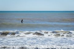 Surfer with paddle board catching the wave.  royalty free stock image