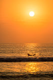 Surfer paddling with a beautiful sunset in Huanchaco, Peru. Surfer paddling with a beautiful sunset in Huanchaco, Peru Stock Photography