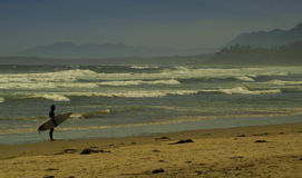 Surfer on Public beach with waves and mountains Tofino British Columbia Royalty Free Stock Image