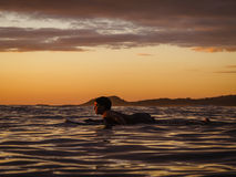 Surfer rests on surfboard scanning water for a good wave on coast of Nicaragua Stock Image