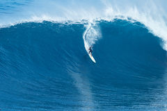 Surfer Rides GIant Wave at Jaws Stock Image
