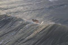 Surfer Rides Huge Wave Off Hurricane Sandy Royalty Free Stock Images